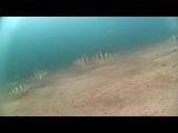 Зимняя рыбалка под льдом на Байкале, Залив Провал 21.12.14 /Lake Baikal-Video Fishing under the ice