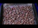 VLOG Как сделать ферментированный чай из розы и жасмина.