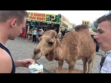 #safari#camel#food#OAE