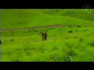 Пограничный спецназ «Сигма», д/ф «След Скорпиона», часть 1