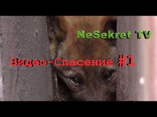 Видео - Спасение 1. Спасение собаки из узкого проёма между гаражами. Город Улан-У ...