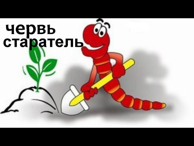 Червь Старатель Владимирский Выращивание в буртах Изготовление биогумуса
