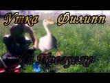 Walking with a duck Прогулка с уткой и потерянная собака