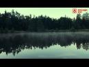 Лес Душа Космос - Безумно красивое видео для релакса