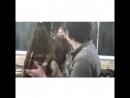 The Walking Dead Vines - Glenn Rhee || Teenage Dirtbag
