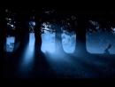 Футаж тёмный лес