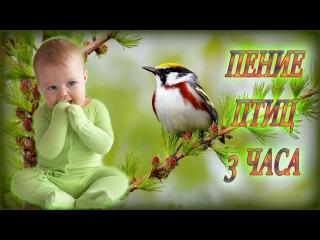 Звуки Природы для Детей | Пение Птиц, Шум Воды для Ребёнка и Родителей
