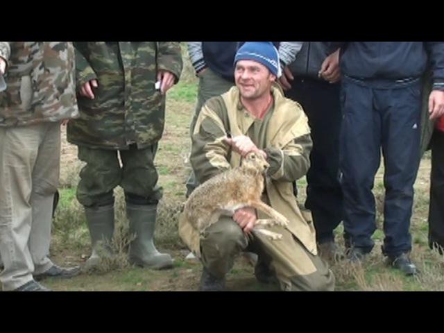 Охота с борзыми Испытания в Ленинском районе Волгоградской области 19 20 10 2013г