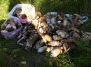 За белыми грибами Грибные места Секреты грибника