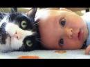 Pisici Drăguț Și Câini Iubesc Copii. Compilare 2015 [Noul HD]