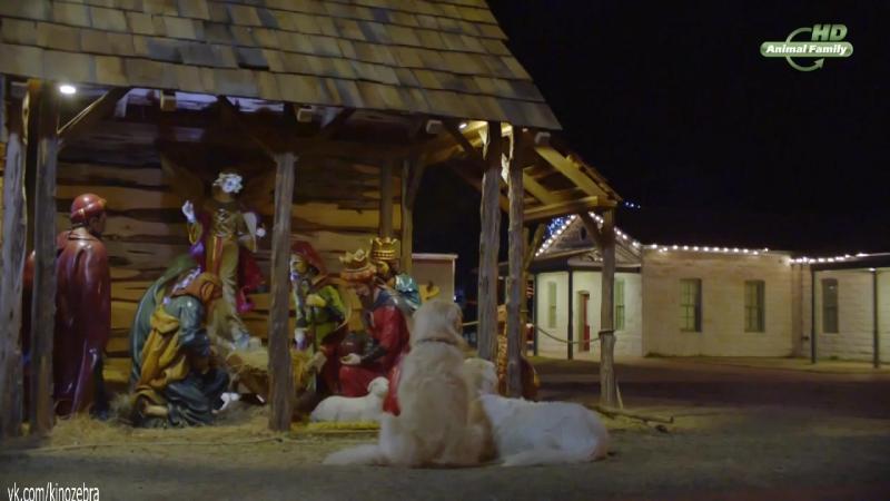 Приключения Бэйли: Рождественский герой / Adventures of Bailey: Christmas Hero (2012). США. Семейный, приключению