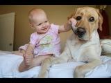 Стоит ли заводить собаку в квартире? + РОЗЫГРЫШ