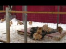 Puppies kennel Iz Knyaginino on walk 7 01 2016