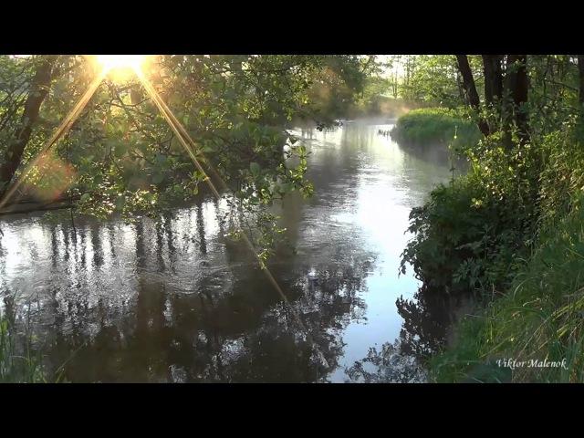 Река. Природа. Пение птиц. Журчание воды. Солнце в ветвях. Релакс. Медитация
