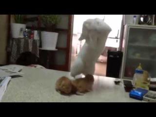 Отец-кот обучает приемам уличной драки своих котят