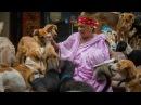 После развода эта женщина живёт счастливой жизнью, спасая четыреста бродячих собак