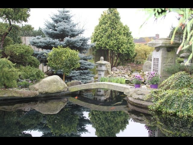 Superbe jardin Japonais multi bassin a koi