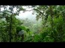 Жизнь по законам джунглей Камерун