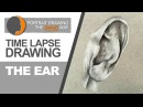 Time Lapse Drawing of an Ear