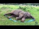 Слон играет с лентой. Прикольно