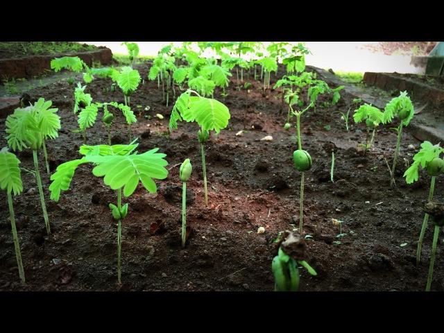 How to grow a forest in your backyard | Shubhendu Sharma