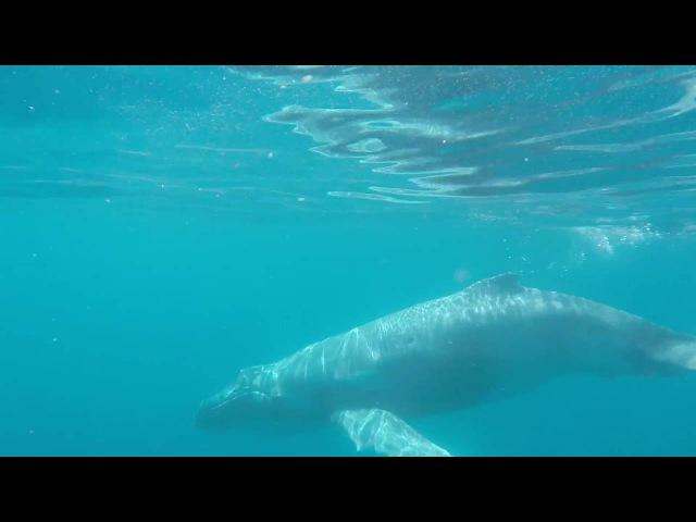 киты MORETON ISLAND