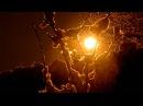 Koan Odysseus Under The Old Tree