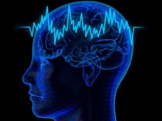 Наш мозг: факты и мифы yfi vjpu: afrns b vbas