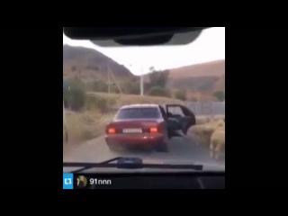 Воришки украли барана, затащив его в машину
