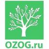 OZOG - о здоровом образе жизни
