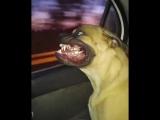 Собакен и окно в машине :3