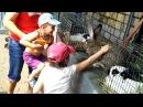 Покупаем домашних питомцев Птичий рынок Киев щенки котята попугаи кролики цыплята