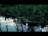 Караченцов Минуты тишины - Батальоны просят огня