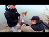 Рыбалка на карпа в Крыму. Ловля сазана на реке Биюк Карасу. 2016 г.
