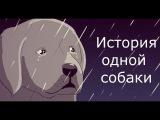 Видео до слез! Посмотри не пожалеешь! История одной собаки. Музыка из фильма Хатико.