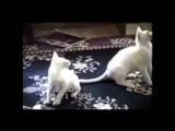 Подборка смешных приколов про кошек!!!