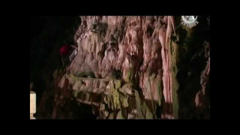 Китайская кухня - ласточкины гнезда