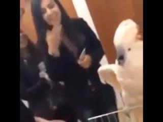 попугай кричит от щекотки