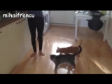 Funny Cats Jump Fails Compilation 2016 -- NEW HD