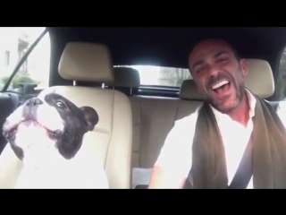 My Best Friend The Dog Song - YouTube