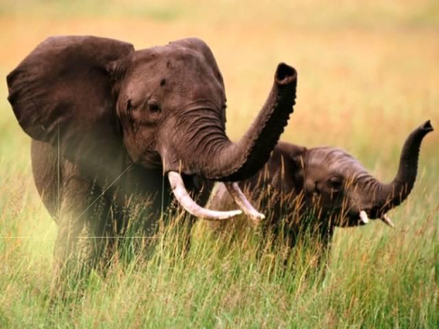 Учебный фильм про слона, видео для детей, развивающее видео, видео для малышей