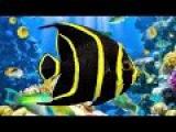 Coral Reef Aquarium &amp The Best Relax Music - 2 Hours - Sleep Music - HD 1080P