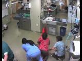 Ветеринар пыталась удержать пса, чтобы ему сделали укол. В итоге пёс скрылся с ветеринаром в неизвестном направлении