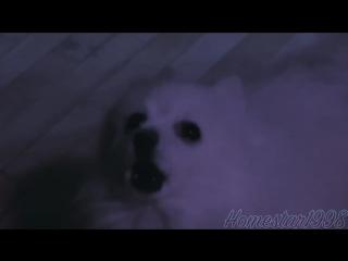 Disrespectful dogger