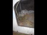Маленькие крольчата:3