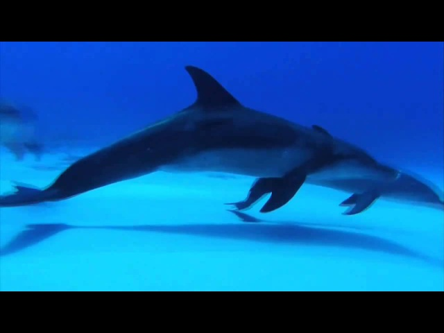 Музыка для релаксации/'Relaxing Music, the best underwater footage, HD
