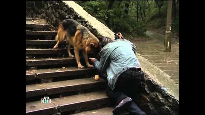 Возвращение Мухтара 5. Серия 3