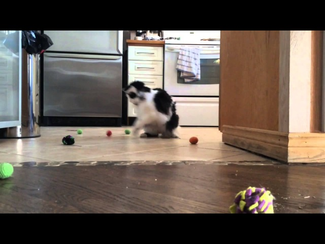The Oreo Cat Getting his groove on