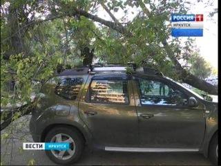 Упавшее дерево чуть не покалечило людей и парализовало движение в Иркутске , Вести-Иркутск