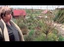 Миндаль Миндаль Ложный Бобовник И Луизиания Декоративные Садовые Кустарники